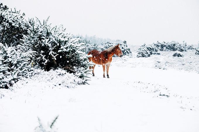 1年で一番寒いのは1月?今さら寒さ対策について考える